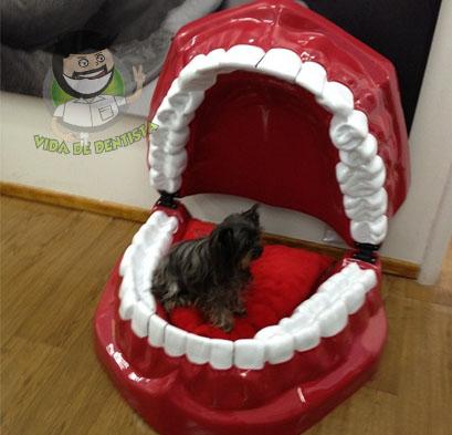 Cama de cachorro de dentista