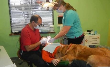 Seus pacientes tem medo de dentista ??? Leve seu cachorro pro consultório