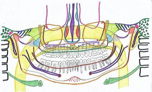 panoramica_anatomia_radiografia
